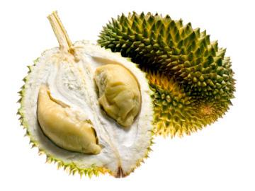Orgasme pakai Durian !