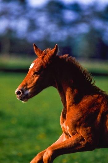 manfaat susu kuda liar untuk pria