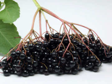 Elderberries, Varietas Baru Buah Berry Yang Ampuh Cegah Kanker