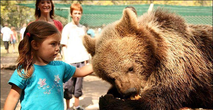 Inilah Kebun Binatang Paling Nekat Di Dunia