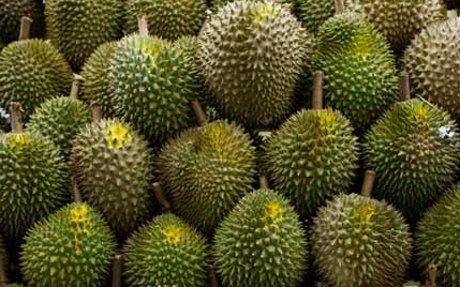 Tewas Tertimpa Durian