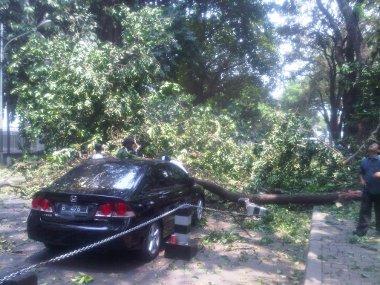 Pohon Tumbang Ternyata di Depan Rumah Dinas Panglima TNI