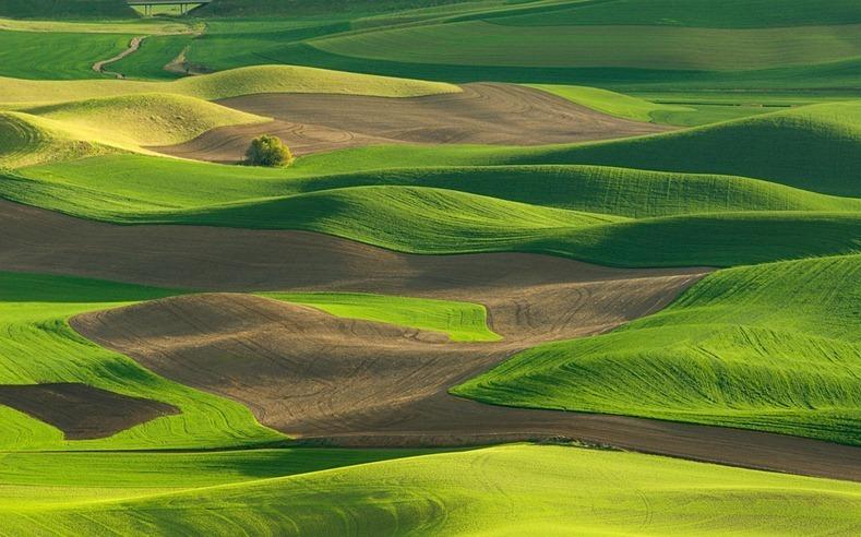 http://images.detik.com/content/2012/10/05/1383/090638_padangrumput2.jpg