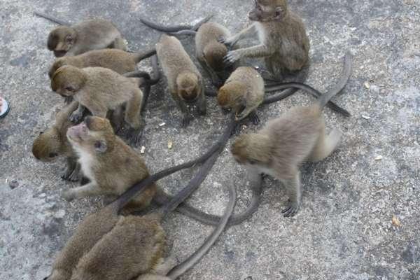 073102 pulausatwa3 5 Pulau di Indonesia Ini Penghuninya Bukan Manusia!