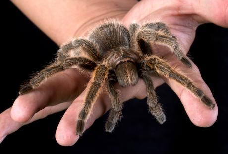 dicopasdong.blogspot.com - Hewan-hewan Ini Berbahaya Tapi Bisa Menyembuhkan