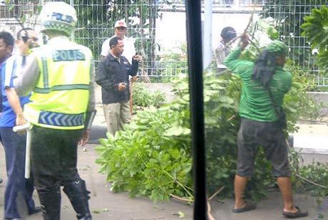 2 Mobil Tertimpa Pohon Tumbang di Kalibata
