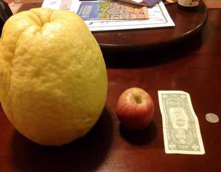 jeruk terunik, jerut besar, jeruk paling besar, jeruk unik