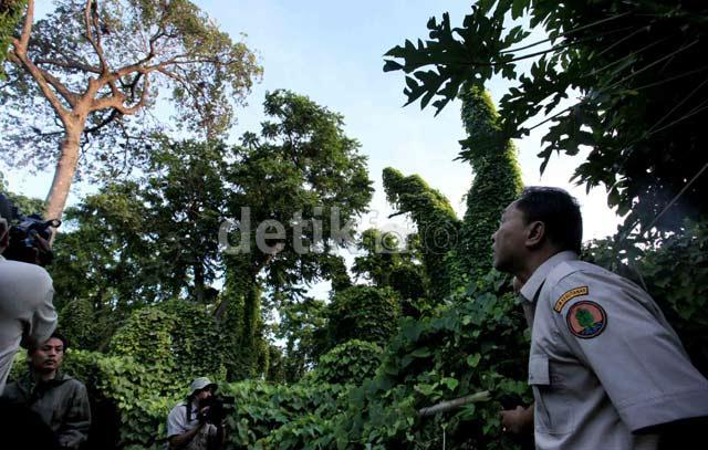 Menhut Tinjau Surganya Burung di Jakarta