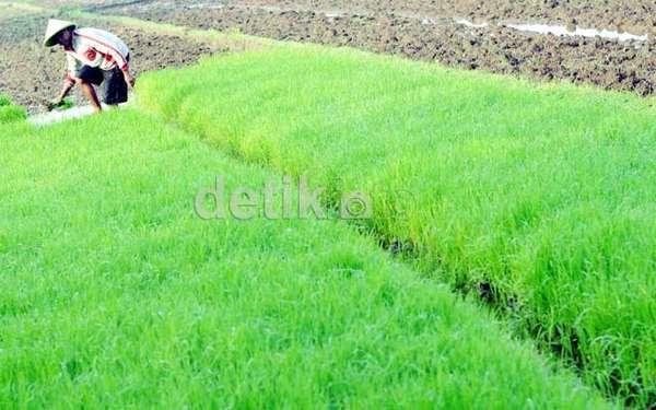 http://images.detik.com/content/2013/08/06/4/pangan.jpg