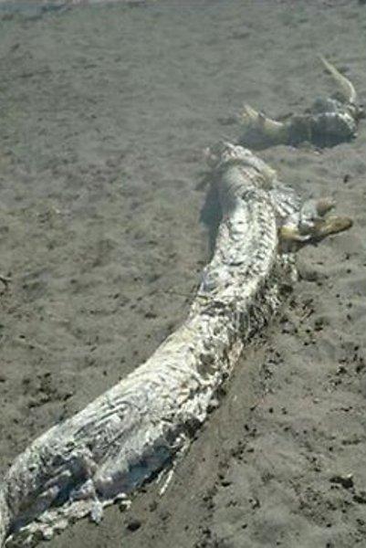 Aneka Monster Laut yang Pernah Muncul