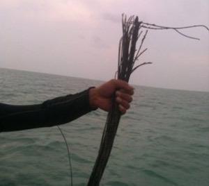 Kabel Laut Putus, Operator Rugi Rp 30 Miliar