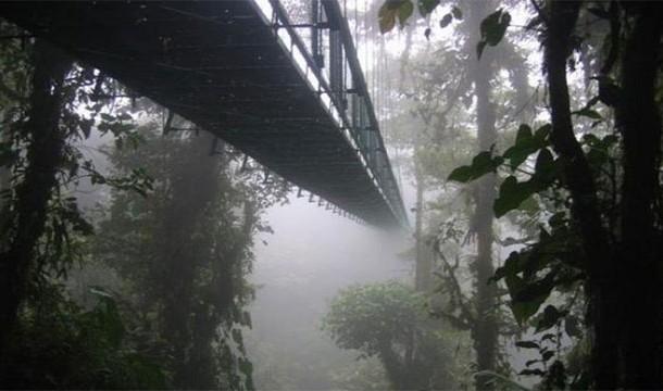 Montenegro Rainforest Bridge