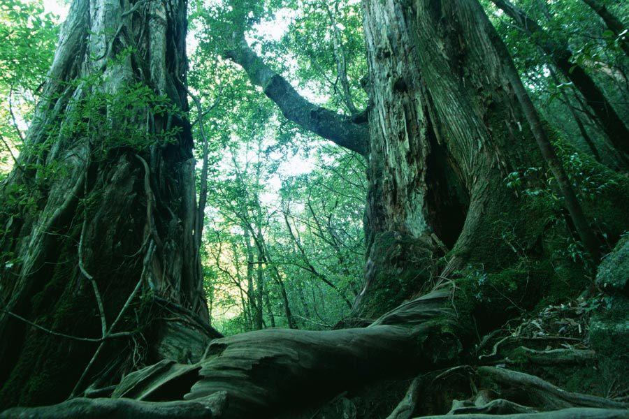 Di balik kecantikan lanskap suatu hutan, biasanya tersisip legenda