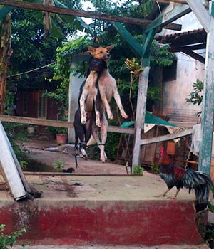 2 Anjing di Depok Dipukuli dan Digantung Hingga Mati karena Isu Babi Ngepet