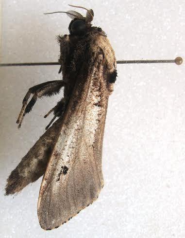 Ini 6 Spesies Baru Ditemukan di Tambora: Cicak Hutan hingga Kupu-kupu Malam - 4