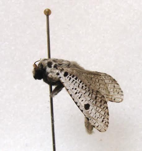 Ini 6 Spesies Baru Ditemukan di Tambora: Cicak Hutan hingga Kupu-kupu Malam - 5
