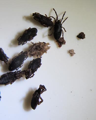 Ini 6 Spesies Baru Ditemukan di Tambora: Cicak Hutan hingga Kupu-kupu Malam - 7