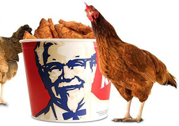 Disebut Ayamnya Bersayap 6 dan Berkaki 8, KFC Tuntut 3 Perusahaan Tiongkok