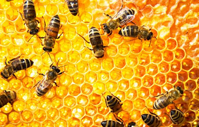 Komisi Fatwa MUI Tetapkan Royal Jelly dan Bee Pollen Halal Dikonsumsi