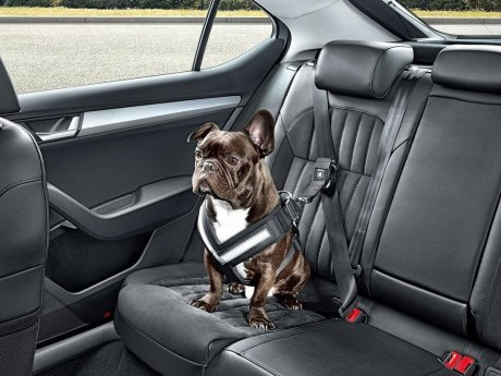 Anjing Juga Perlu Seatbelt Saat Berada di Mobil