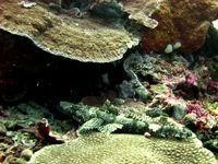 Surga Bawah Laut Wakatobi