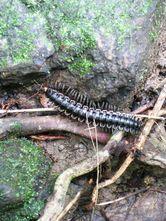 Fauna 3 Taman Nasional Gn. Palung