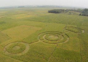 Crop Circle Cikarang untuk Iklan Keripik Kentang