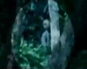 Alien Tertangkap Kamera Video di Hutan Amazon