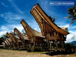 Yuk! Ramai-ramai ke 'Lovely December' di Toraja