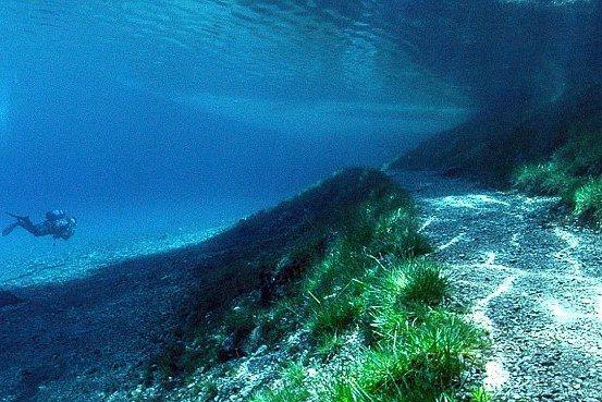 berenang menuju jalan setapak (sumber: dailymail.co.uk)