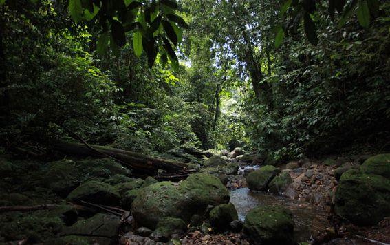 Vegetasi di Gunung Leuser, Aceh (travel-mongabay.com)