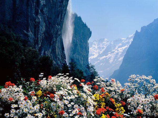 Bunga cantik di bukit (citypictures.org)