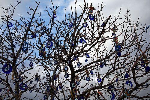 Bagian atas pohon yang dipenuhi Nazar (Sumber: flickrhivemind.net)