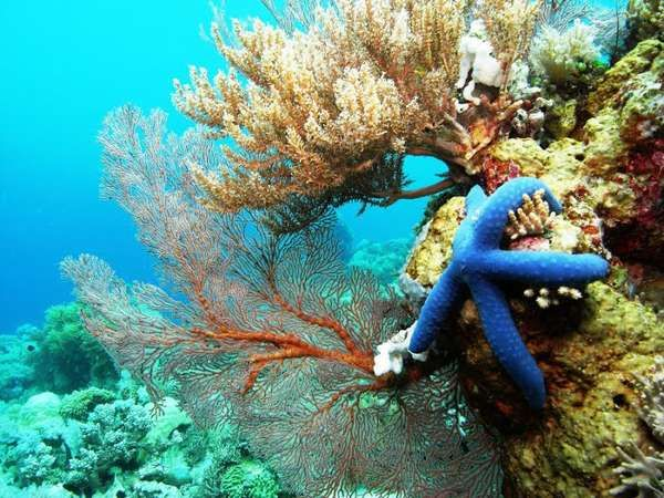 [imagetag] Indahnya bawah laut Takabonerate (lintangbuanatours.com)