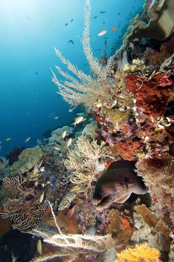 [imagetag] Indahnya bawah laut Raja Ampat (dok. Wilman Latief/dtraveller)