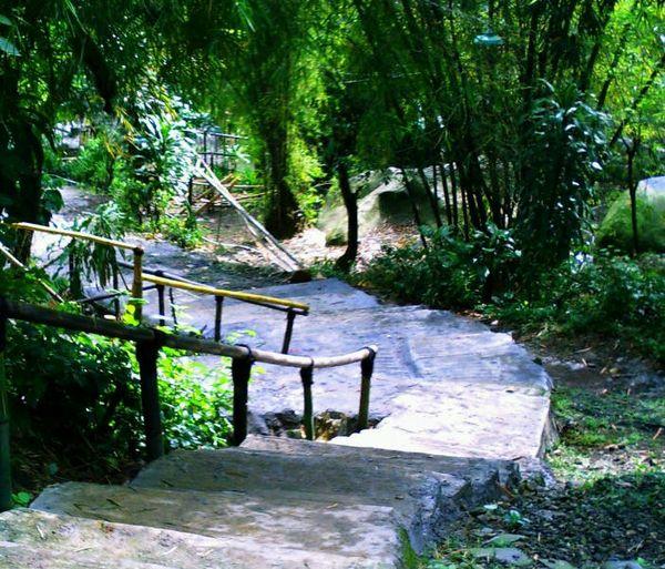 Jalan setapak menuju pemandia (ragamwisataindonesia.blogspot.com)