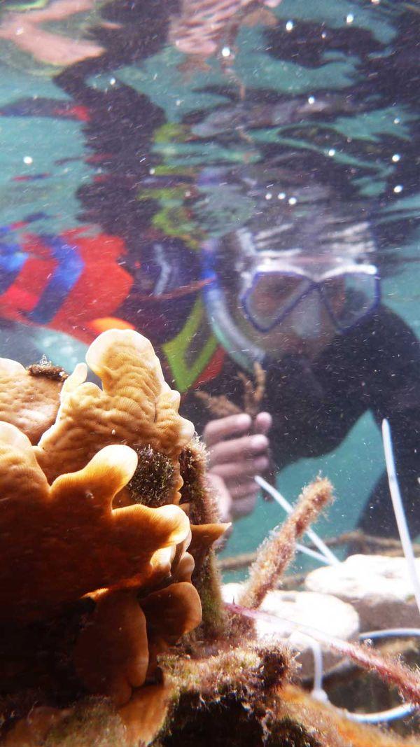 Seru! Menyelam Sambil Menanam Koral Di Pulau Tegal, Lampung [ www.BlogApaAja.com ]
