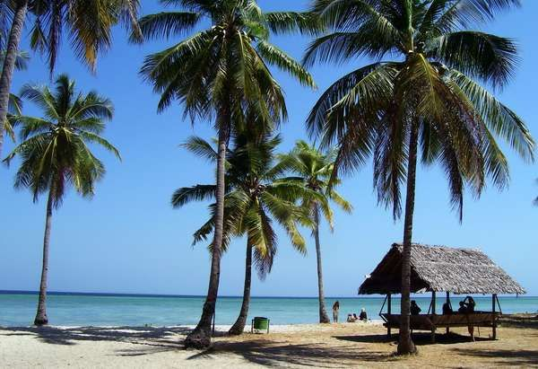 Pohon kelapa dan pasir putih khas Pulau Hoga