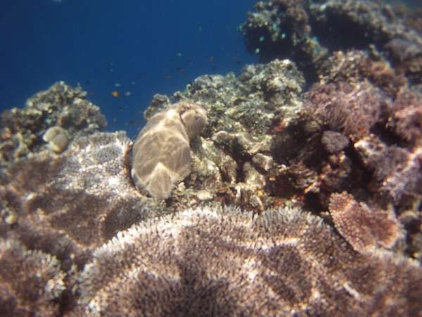 Terumbu karang yang cantik