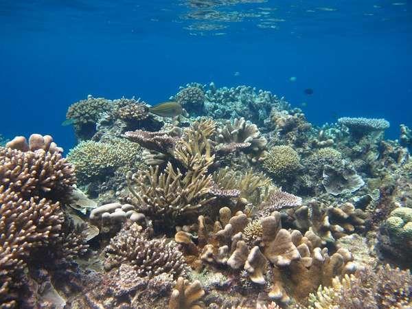 Terumbu karang yang memesona di Pulau Maratua (aryo bilowo r/dTraveler)
