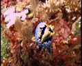 nudibranch memang sangat lucu dan menggemaskan