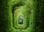 The Tunnel of Love, Terowongan Paling Romantis di Dunia