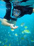 Underwater Pulau Air