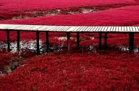 Jembatan untuk melihat rumput di Pantai Merah (cn-tourism.com)
