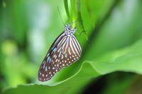 Aneka kupu-kupu cantik ada di sini (Avi/detikTravel)