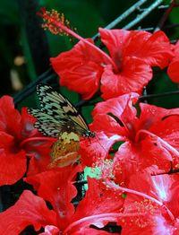 Dengan mengoles madu di tangan, Anda bisa mengundang kupu-kupu hinggap di tangan Anda (Avi/detikTravel)
