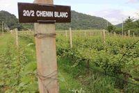 Anggur yang dihasilkan di lahan pertanian GranMonte antara lain Shiraz, Tempranillo, Chenin Blanc dan Cabernet Sauvignon.