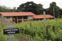 GranMonte Wineyard and Vinery punya Guest house bertarif 3.500 baht (Rp 1.050.000) per malam.