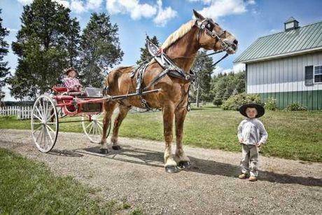 Kuda Tertinggi