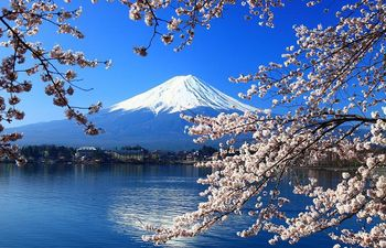 Cherry Blossoms & Mount Fuji - Japan